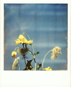 taken by Torsten Albrecht on PX 70 Cool Impossible film Polaroid Instant Camera, Polaroid Instax, Film Photography, White Photography, Lana Del Rey Albums, Film Images, Polaroid Pictures, Botanical Flowers, Lomography