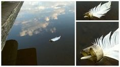 Peace by AP. Saimaa.