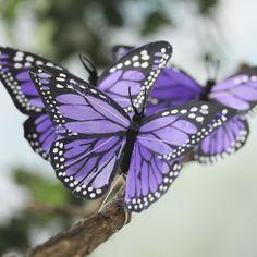 Pictures Of Butterflies Google Search Butterflies