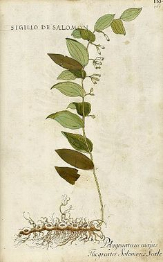 After Heinrich Füllmaurer and Albrecht Meyer (Italian copy), Solomon's seal (1560)