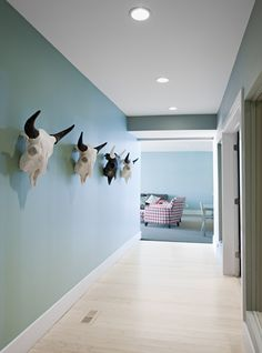 The skulls on the turquoise wall are killer!