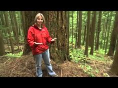 """In this real-life model of forest resilience and regeneration, Professor Suzanne Simard shows that all trees in a forest ecosystem are interconnected, with the largest, oldest, """"mother"""