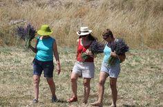 Grupo 2 - Vera Guedes Tour Aromático