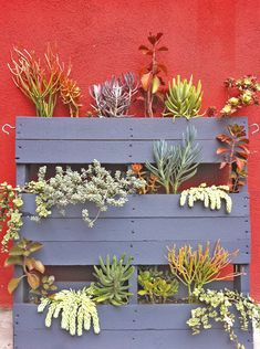 Upcycled Painted Pallet Succulent Garden
