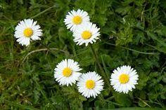 Résultats de recherche d'images pour «printemps»