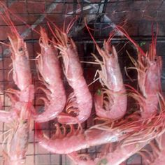 Buon Pranzo e buon Venerdì : ecco i #gamberoniallagriglia #ricettedibacco semplicemente ottimi cottura al caminetto #seafood #gamberoni #grill C'è più gusto a mangiare per bene #baccoperbaccoitalia