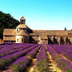 L'Abbaye et L'avande - Senanque Abbey, Provence, France Provence France, Vineyard, Travel, Outdoor, Outdoors, Viajes, Provence, Vine Yard, Destinations