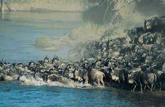Maasai Mara National Reserve | masai mara national reserve das masai mara national reserve