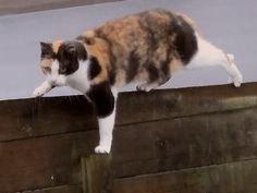 Cat climing by Renne Rus on Flickr.