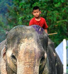 Child riding an elephant in Thailand  http://www.hello-thailand.net/