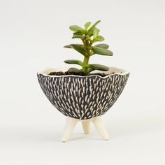 Black and White Pottery Planter ~ Textured Ceramics Ceramic Plant Pot Modern Planter Ceramic Planter Cactus Planter~Handmade Ceramic Bowl IS