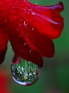 The Drop on the Flower | Amazing Travel Pictures - Amazing Pictures, Images, Photography from Travels All Aronud the World