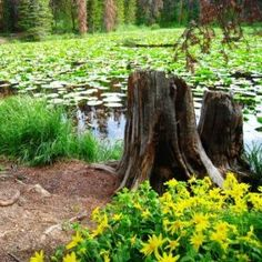 Lily Pad Lake - Summit County, Colorado Hiking