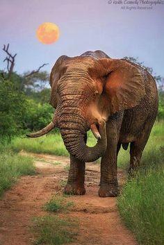 Elephants are amazing!