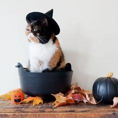#cat #halloween