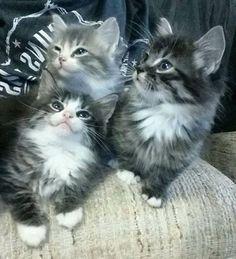 3 little cuties                                                                                                                                                                                 More