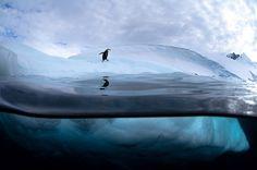 Justin Hofman Antarctic Wildlife photography