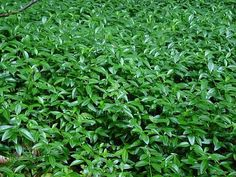 You searched for label/Κηπος - SuperEverything Green Leaf Background, Citrus Trees, Grass Field, Aquaponics System, Plant Species, Stevia, Myrtle, Green Leaves, Green Grass