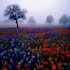 Imagenes De Rosas Y Flores