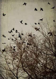 Flying Black Birds Art Print  photography by TriciaMcKellarPhoto,