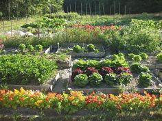 hgtv farmhouse ideas | Old Farmhouse Garden – Garden Designs – Decorating Ideas – HGTV
