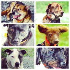 More beautiful faces from this past weekend. #evasplaypupspa #doggievacay #dogdaysofsummer #dogsofinstagram #hairlessdog #pitbullsofinstagram #labsofinstagram #endlessmountains #mountpleasant