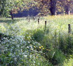 Non loin de la Vézère au Moustier (Dordogne) France. Via Flickr.