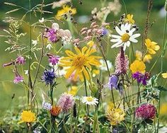 Meadow dreams meaning - Interpretation and Meaning Dream Dictionary Wild Flower Meadow, Meadow Flowers, Love Flowers, Spring Flowers, Wild Flowers, Beautiful Flowers, Exotic Flowers, Purple Flowers, Fresh Flowers