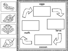 Pin on Bugs & Minibeasts Free Teaching Resources