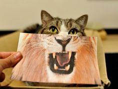 Mucho Gato que se cree Lion.