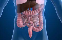 Kanskje vi i framtida kan behandle IBS ved å bedre gjæringa i tarmen? Ragnhild Undseths doktorgrad kaster lys over mysteriet irritabel tarm. Treating Ibs, Irritable Bowel Syndrome, Fodmap Diet, Human Body, People, Sheds, Qigong, Research, Illustration