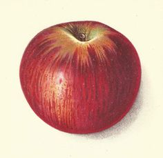 1912 Antique Apple Print Lithograph Book Plate Original Summer King Apple by catladycollectibles on Etsy