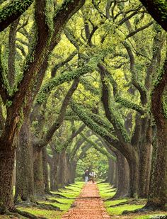 pics of boulevard oaks in houston, tx - Google Search