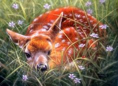 Solitary Fawn - Deer Wallpaper ID 1982305 - Desktop Nexus Animals Hirsch Wallpaper, Deer Wallpaper, Painting Wallpaper, Animals And Pets, Baby Animals, Cute Animals, Wild Animals, Wildlife Paintings, Wildlife Art