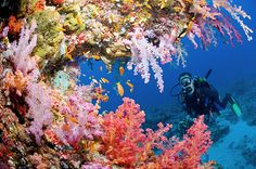 Colourful coral, Red Sea, Egypt