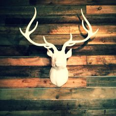 White deer head on wood wall just put up at the Sevenly office. So good.
