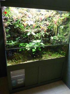 Guinea Pig Toys, Guinea Pig Care, Reptile Cage, Reptile Enclosure, Paludarium, Gecko Vivarium, Aquarium Landscape, Reptile Terrarium, Carnivorous Plants