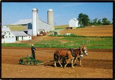 UNITED STATES (Pennsylvania) - Life in Amish Country (3)