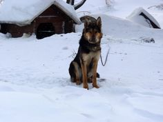 #Hund im #Schnee