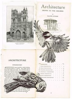 Mark Powell - two birds, drawn on the pages of a book on Architecture - ballpoint pen drawing