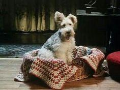 Bob the terrier - Poirot