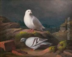Doves On A Cliff Oil Painting,  Ferdinand Von Wright  (1822-1906) - Ferdinand von Wright maalasi lukuisia kyyhkysaiheita.Niitä tilattiin häneltä erityisesti,sillä linnut viehättivät taiteilijan lisäksi yleisöä. Ferdinandilla oli kyyhkyslakka sekä Lugnetin että Haminalahden kartanon ullakolla. Vuodesta 1885 alkaen Ferdinand von Wright sai keisarin hänelle Suomen Taideyhdistyksen aloitteesta myöntämää vuotuista eläkettä. Taiteilija kuoli kotonaan 84-vuotiaana vuonna 1906.