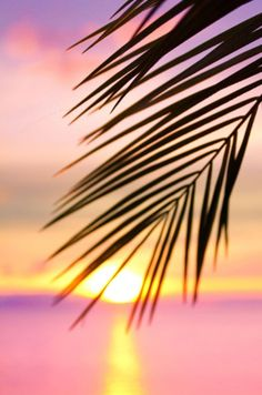 Palm tree and pastel sunset