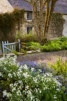 Bluebells in the cottage garden~ Cornwall! {Beautiful courtyard}