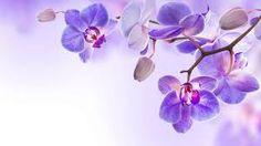 Afbeeldingsresultaat voor orchideeën wallpaper