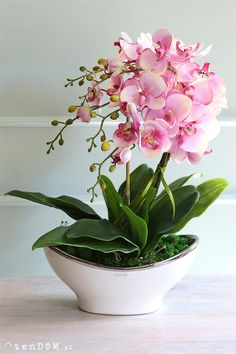 Indoor Flowers, Go Green, Houseplants, Flower Designs, Perennials, Peonies, Flower Arrangements, Beautiful Flowers, New Homes