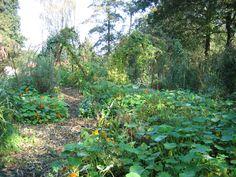 Langs de Akker - Amstelveen. Een ontdekkingspad met wilgentenen bogen en veel  Oostindische kers langs moesgewassen.