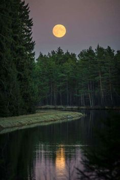 Moon- A beautiful photograph of the moon at dusk. I love the coloring in this photo the yellow/orange moon against the purple sky and green trees. Notice the amazing reflection of the moon in the water. Beautiful Moon, Beautiful World, Beautiful Places, Moon Pictures, Pretty Pictures, Shoot The Moon, All Nature, Night Skies, Sky Night