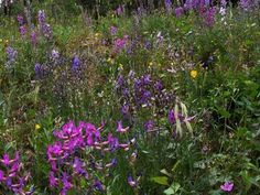 Picture of Beautiful WILD FLOWERS!!