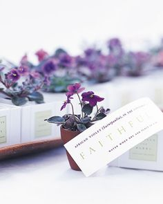 African violets make pretty, eco-friendly favors.